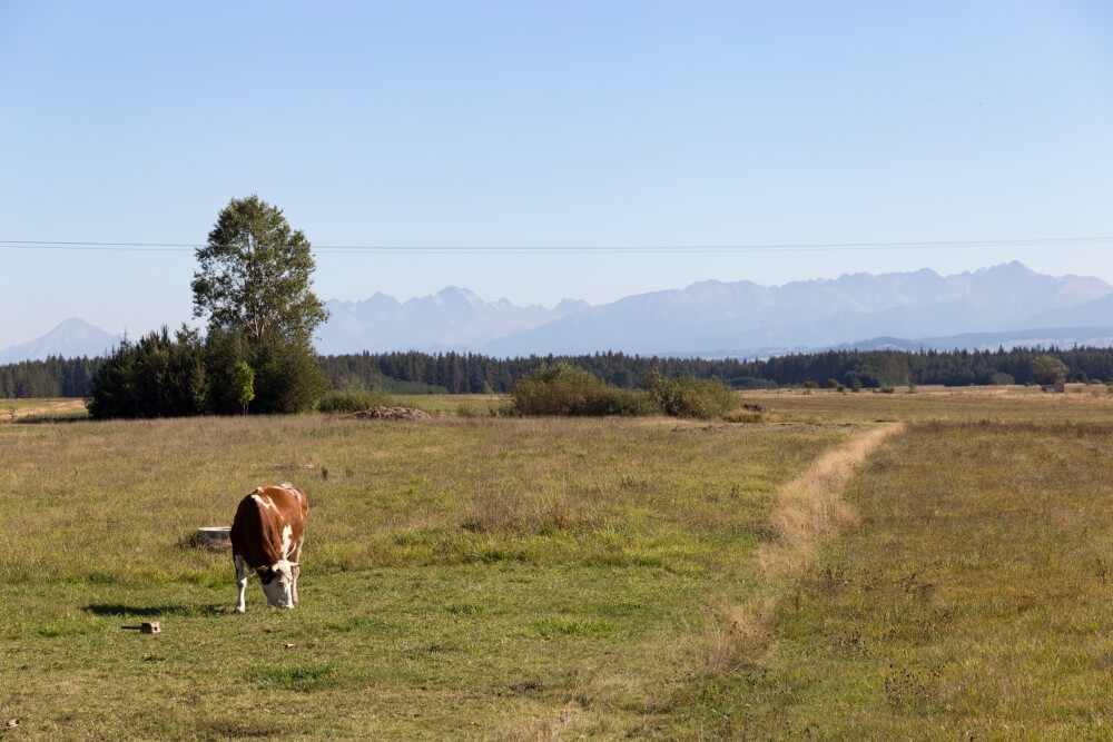Anreise über Polen: Blick zur Hohen Tatra