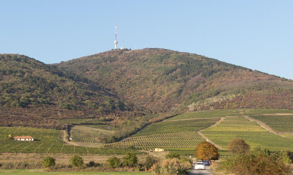Das Wahrzeichen von Tokaj - der Kegelberg