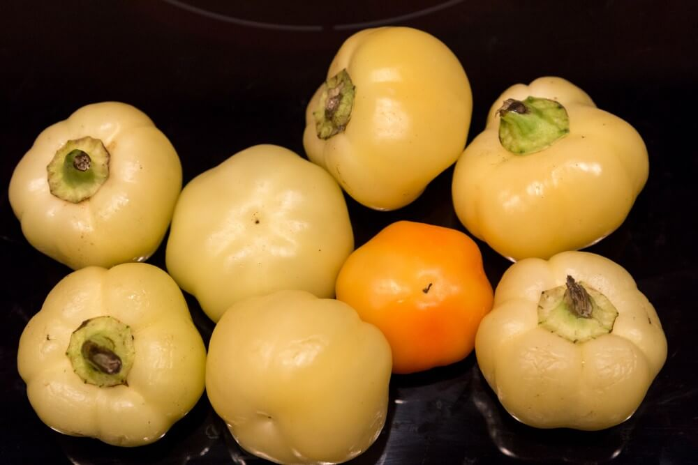 Apfelpaprika, scharf (csipös almapaprika)