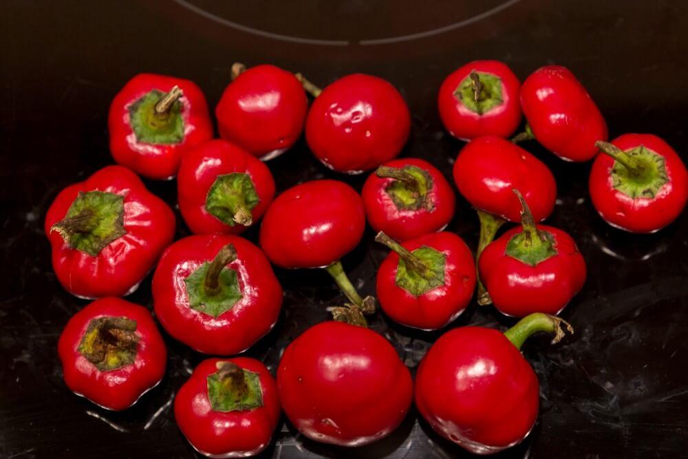 Kirschpaprika (cseresznye paprika)
