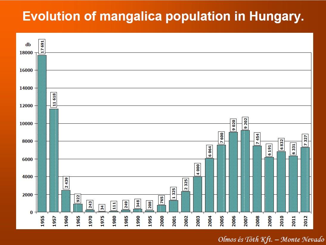 Mangalica-Population, © Péter Tóth, Farmer Expo Debrecen 2013
