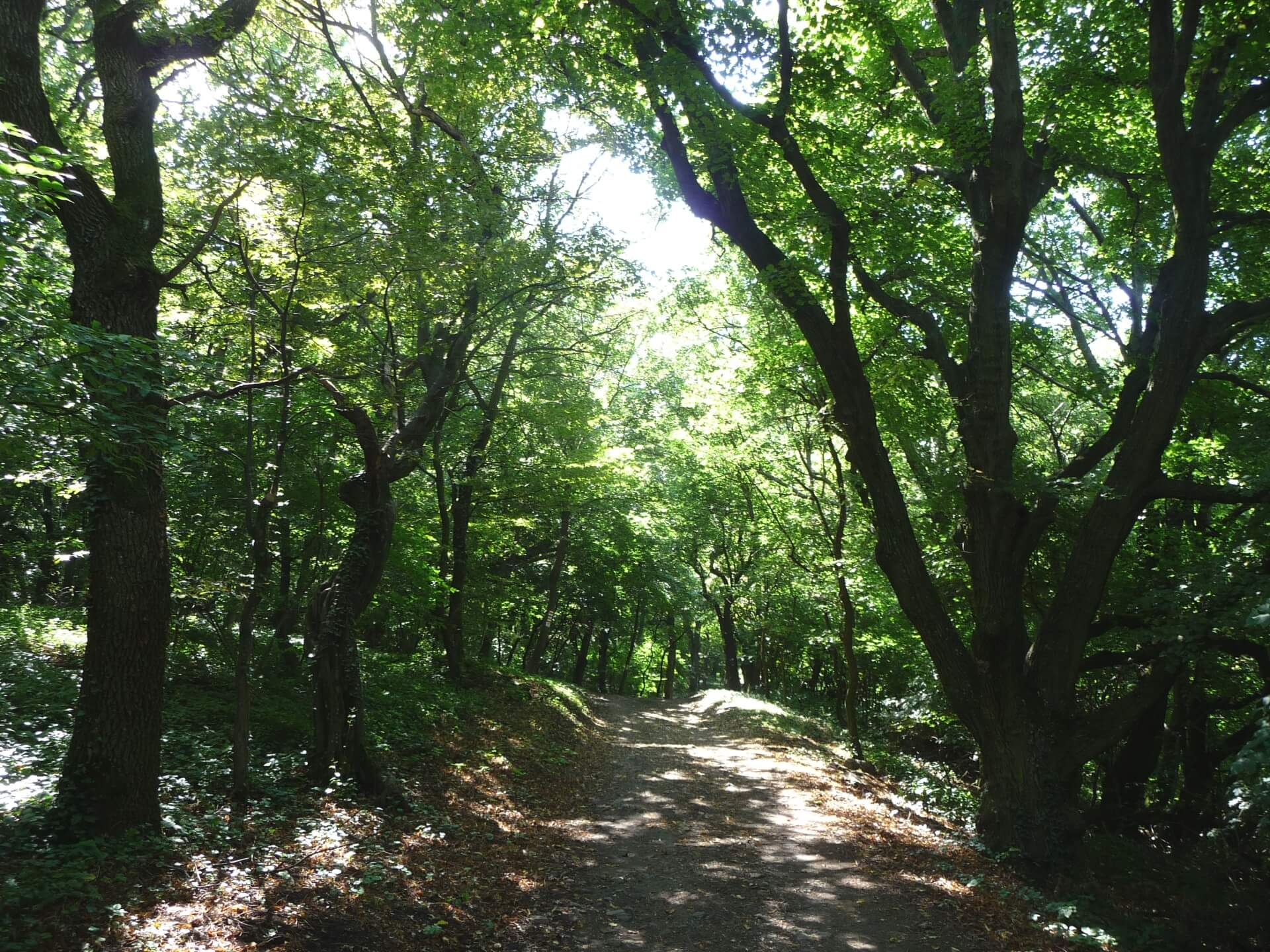 Im Wald am Somló hegy