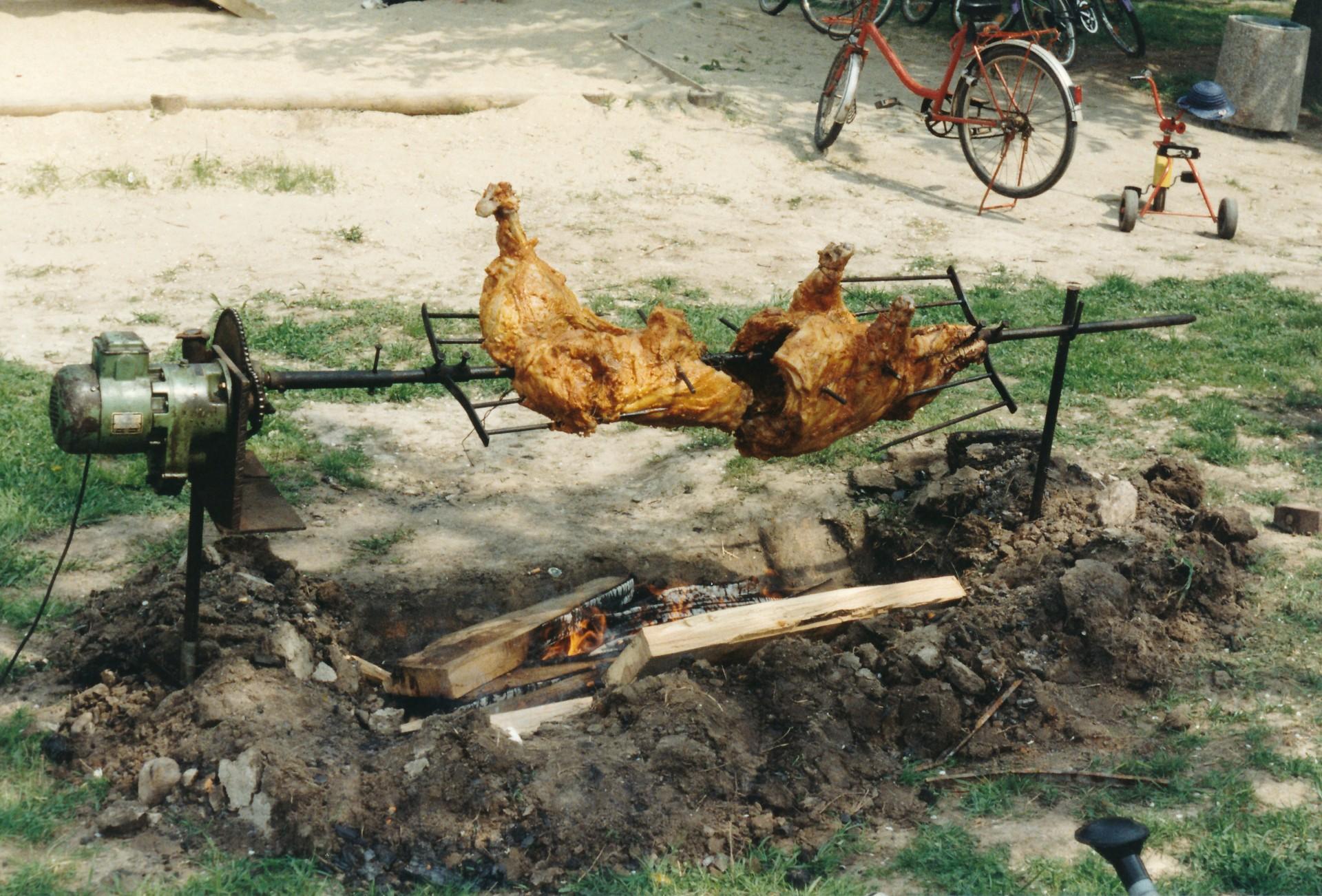 Spießschwein, Dorfanger Stahmeln, 1994