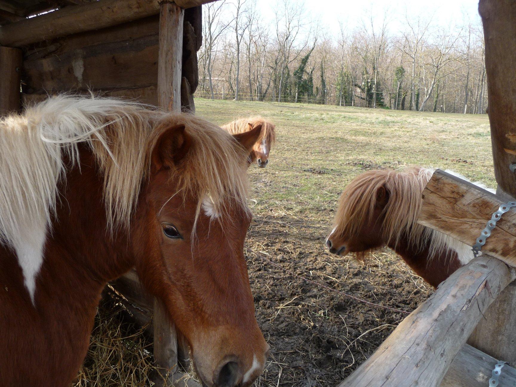 Pferde an der Loki Csárda Marcali